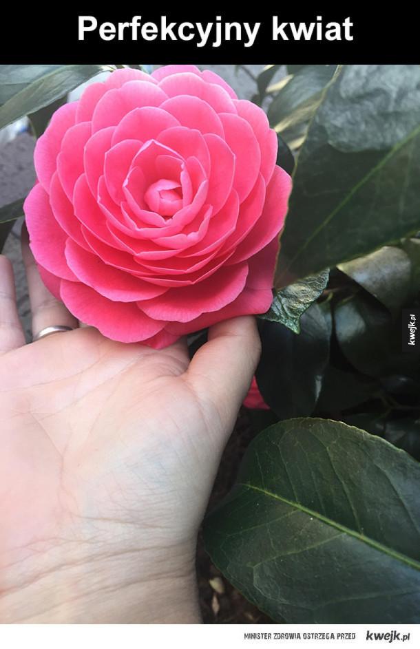 Idealny kwiat
