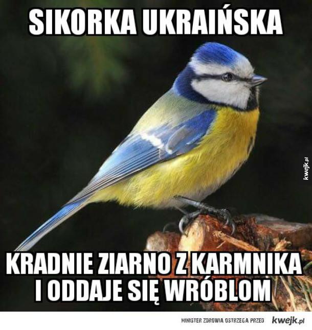 Ptaki z Ukrainy