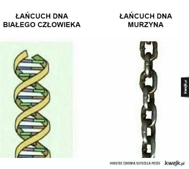 Porównanie DNA
