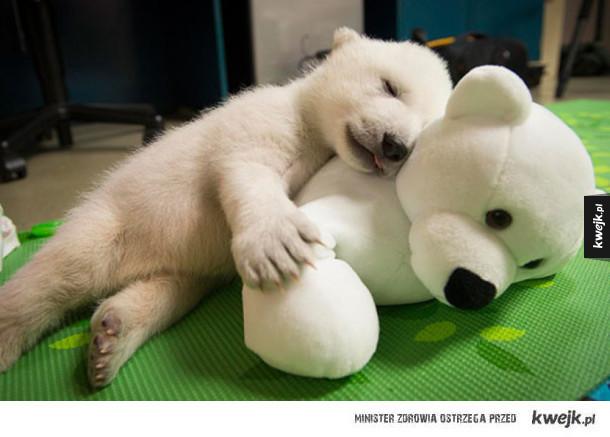 Zwierzaki, które śpią ze swoimi maskotkami