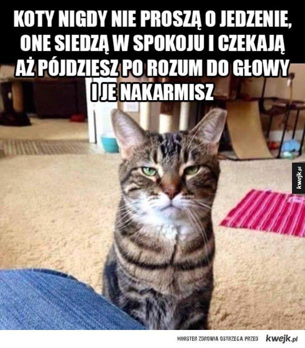 Tak działaja koty