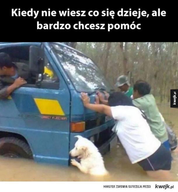 pies pomocnik