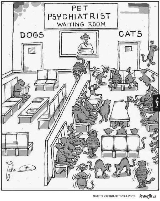 Psychiatra dla zwierząt