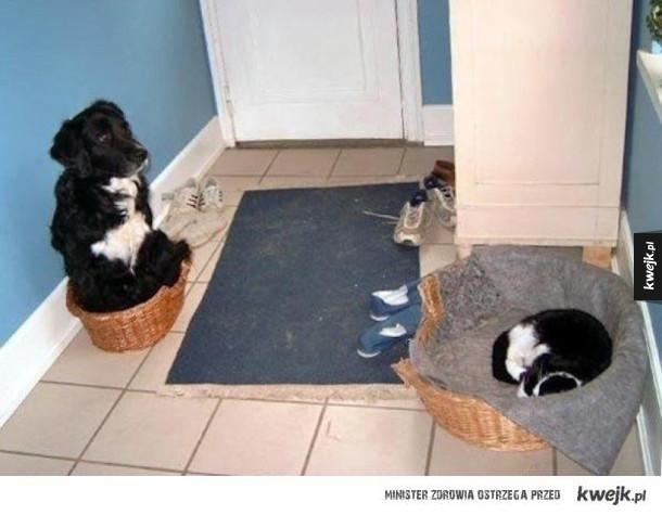 Koty, które kradną łóżka psom