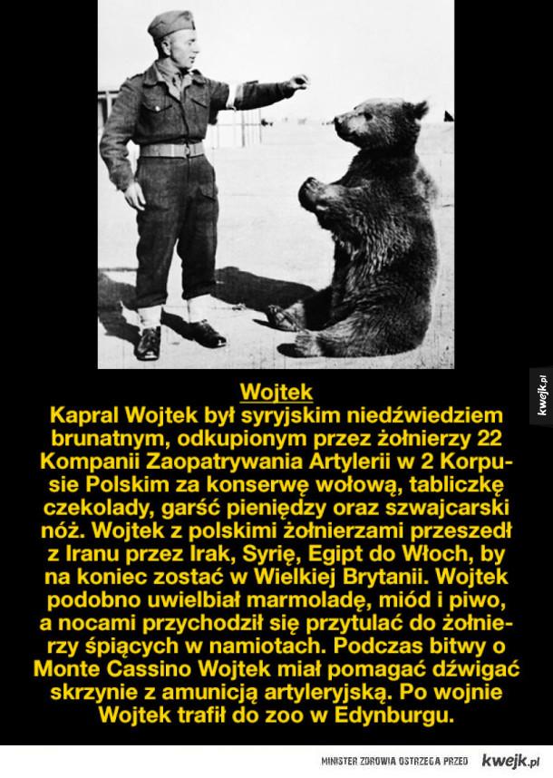 Zwierzęce gwiazdy z czasów wojny