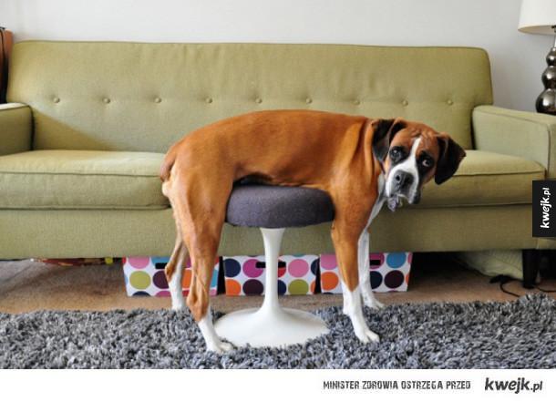 Zwierzęta, które nie do końca rozumieją, jak działają meble