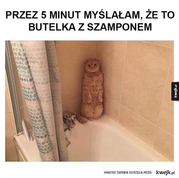 Koteł się ukrył