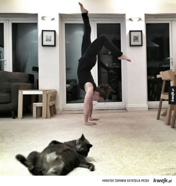 Koty mistrzami drugiego (i pierwszego) planu