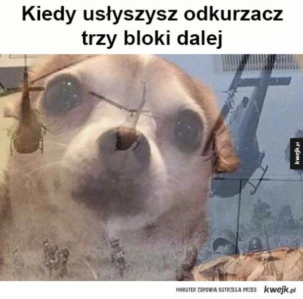 Psy są dziwne xD