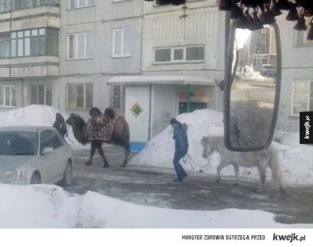 Tymczasem gdzieś w dalekiej Rosji
