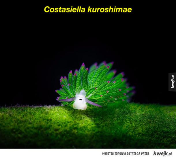 Rzuć wszystko i patrz na te ślimaki morskie