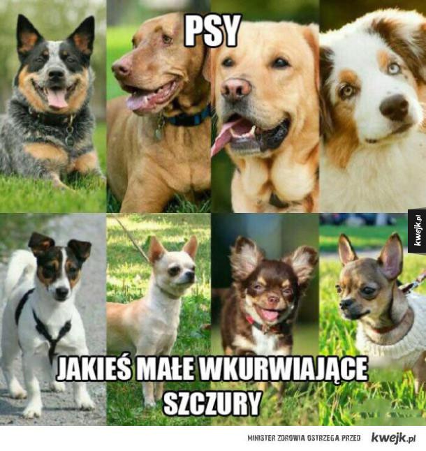tylko prawdziwe psy!