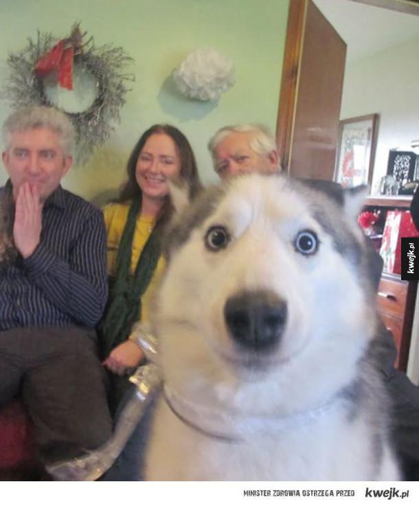 Psy mistrzami drugiego (i pierwszego) planu