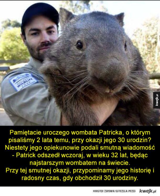 Odszedł najstarszy wombat - Patrick
