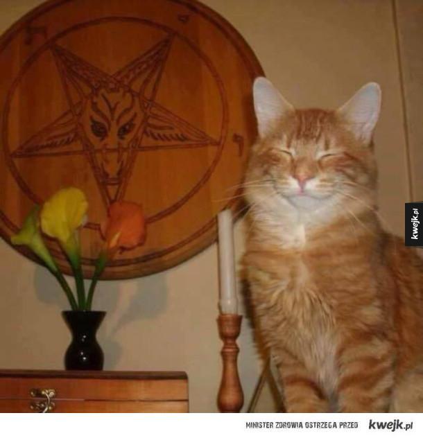 Dziwny kot xD
