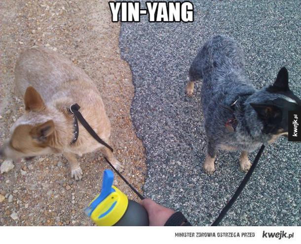 Prawie jak Yin-yang