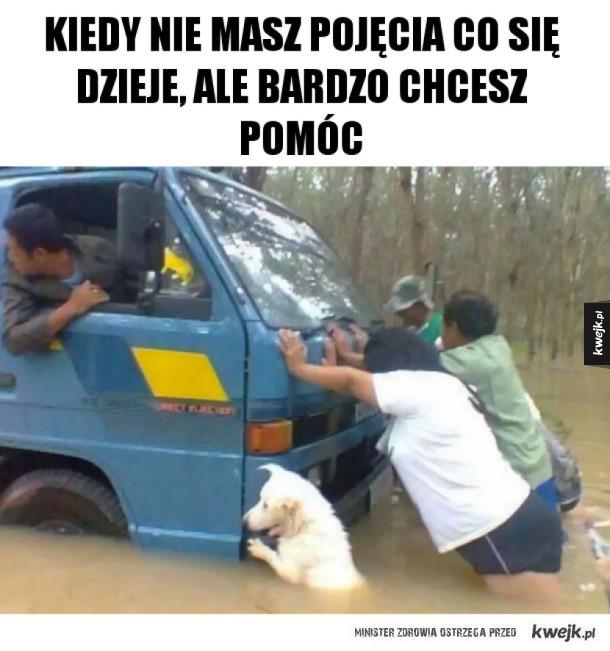 Memy ze zwierzętami
