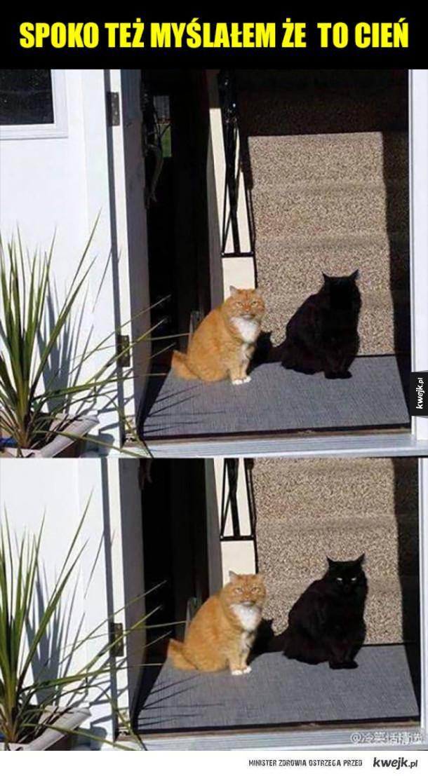 Ale dziwny cień!