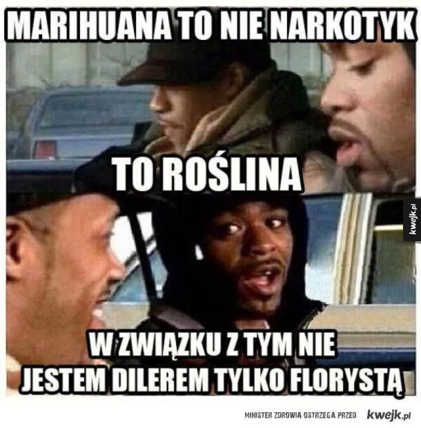 Marihuana to roślina