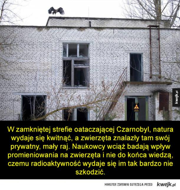 Zwierzęta Czarnobyla