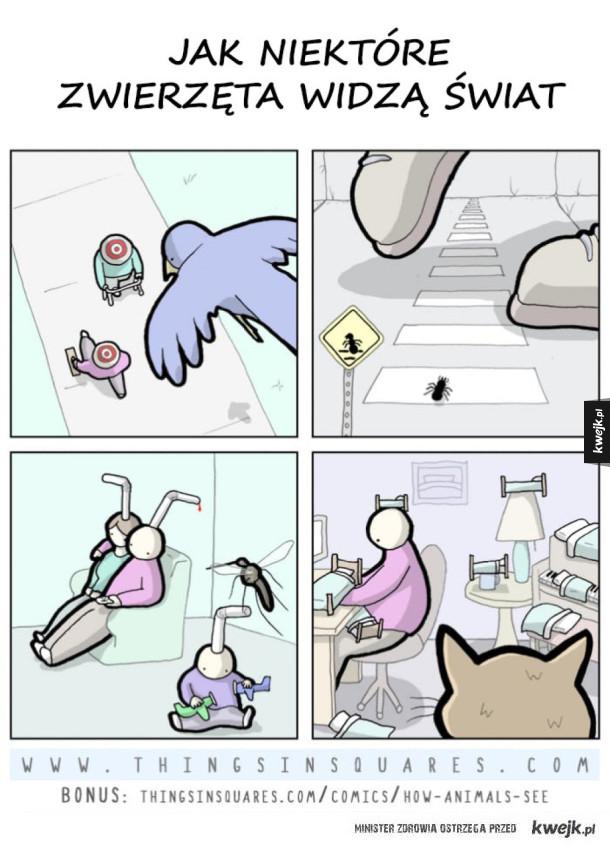 Jak zwierzęta widzą świat