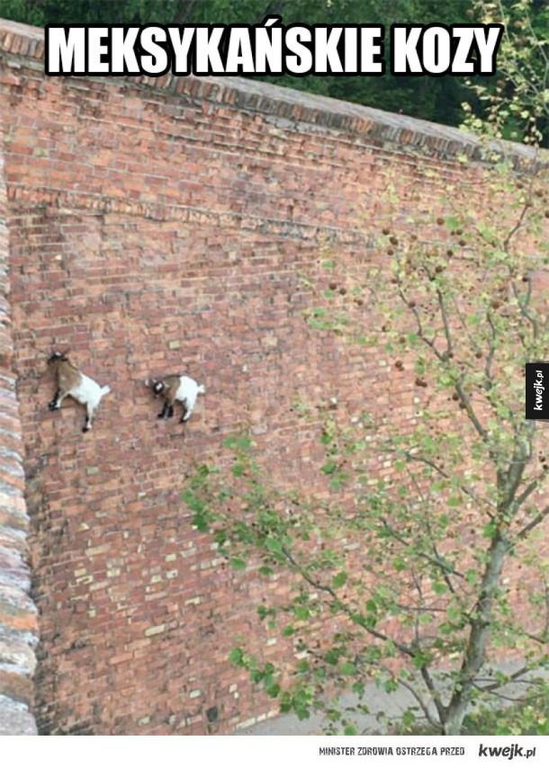 Kozy z Meksyku