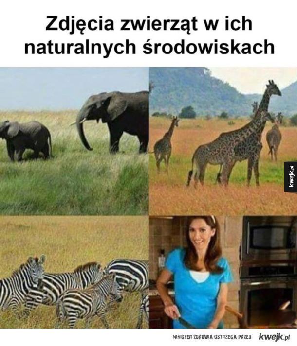 naturalne środowisko