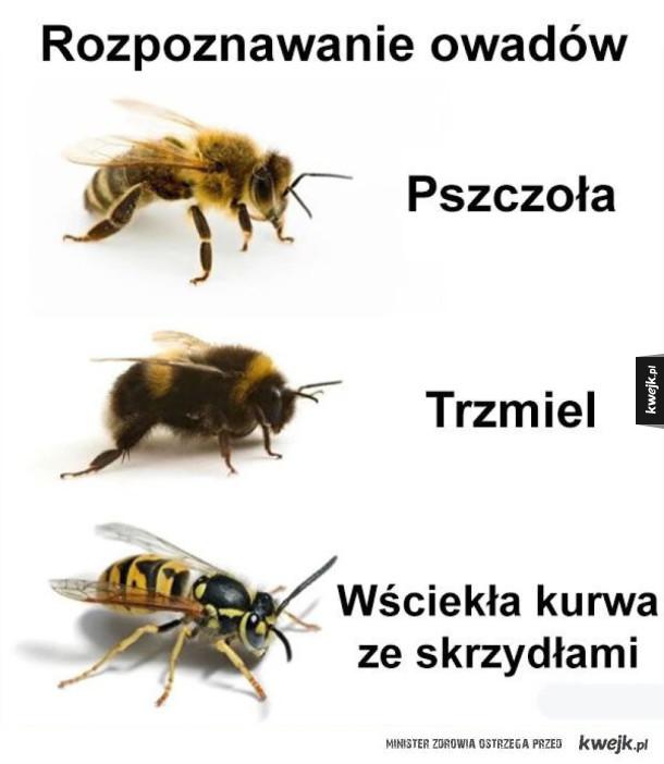 rozpoznawanie owadów
