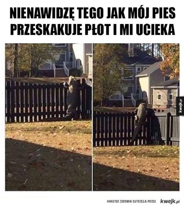 Pies mi ucieka