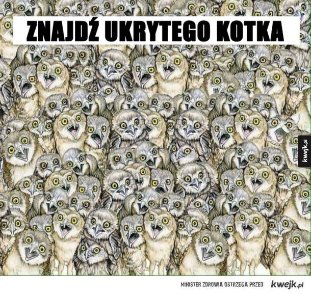 Zakamuflowany koteł