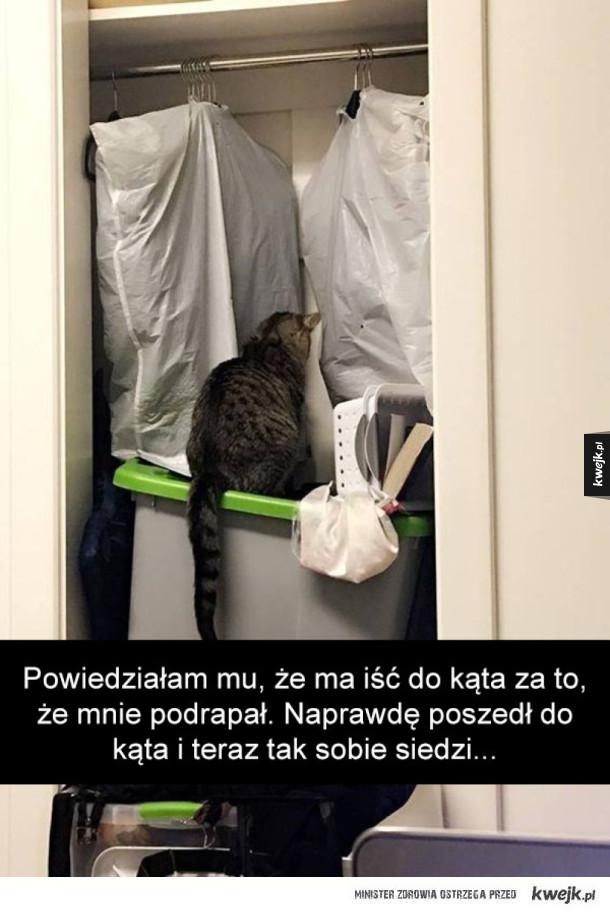 Koty ze Snapchata