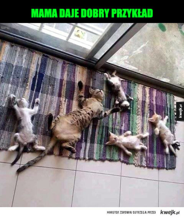 śpiące koteły
