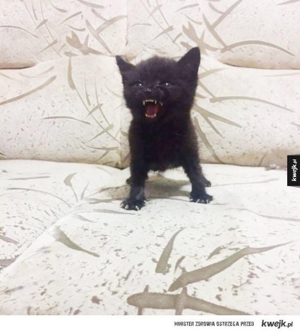 Wkurzone koteczki, które i tak są niesamowicie słodkie