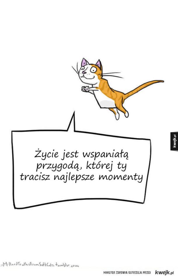 Depresyjne kotki przekazują smutne prawdy o życiu