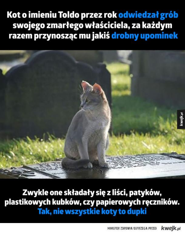 Nie każdy kot to dupek