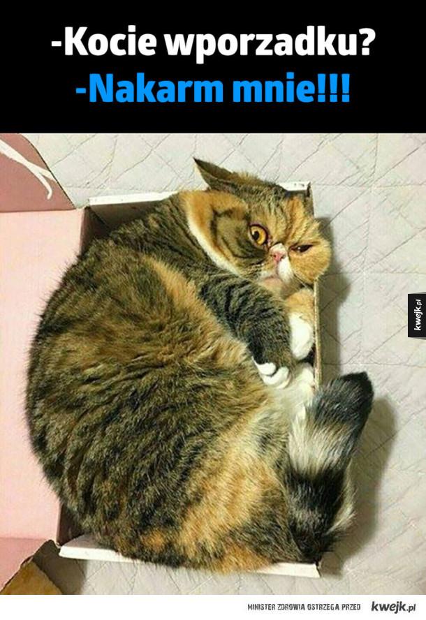 Logika kota