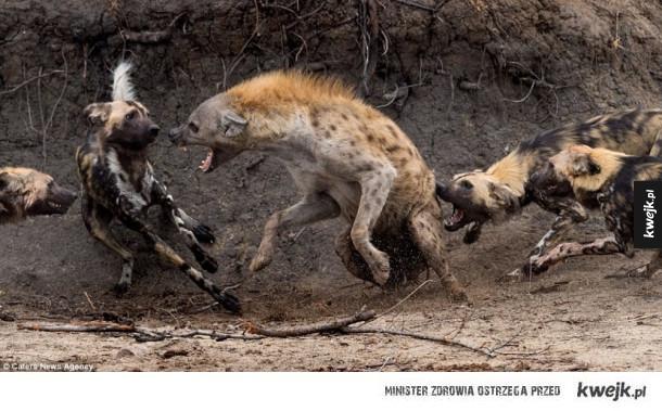 Natura potrafi być brutalna