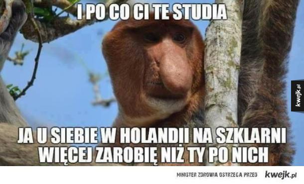 Typowy Janusz Galeria Kwejkpl