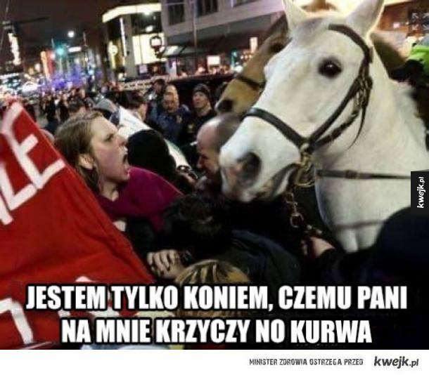 Koń na proteście