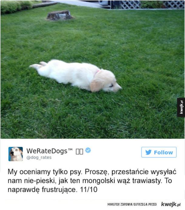 WeRateDogs ocenia tylko psy