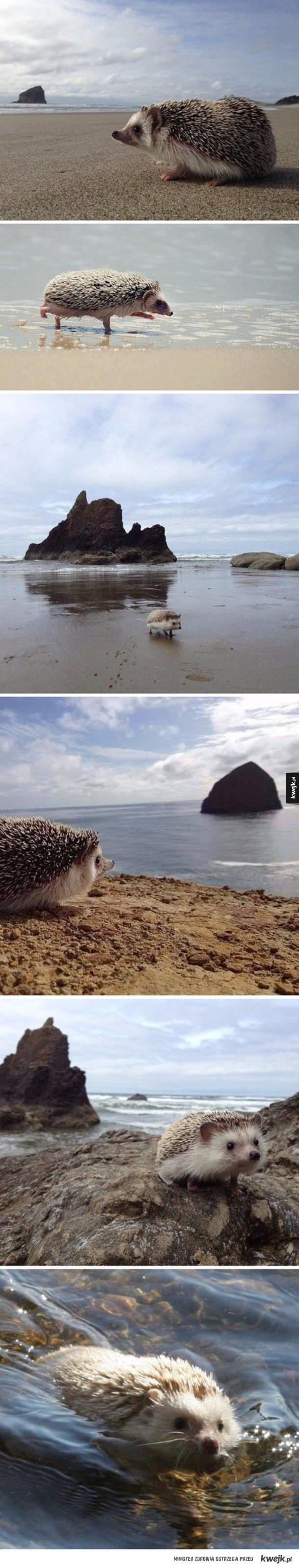 Jeż nad morzem