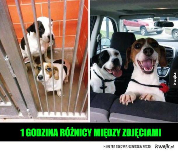 adoptowane pieseły