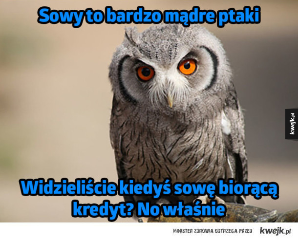 Sowa mądry ptak