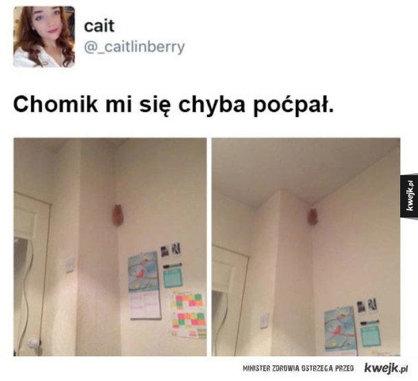 Co ten Chomik