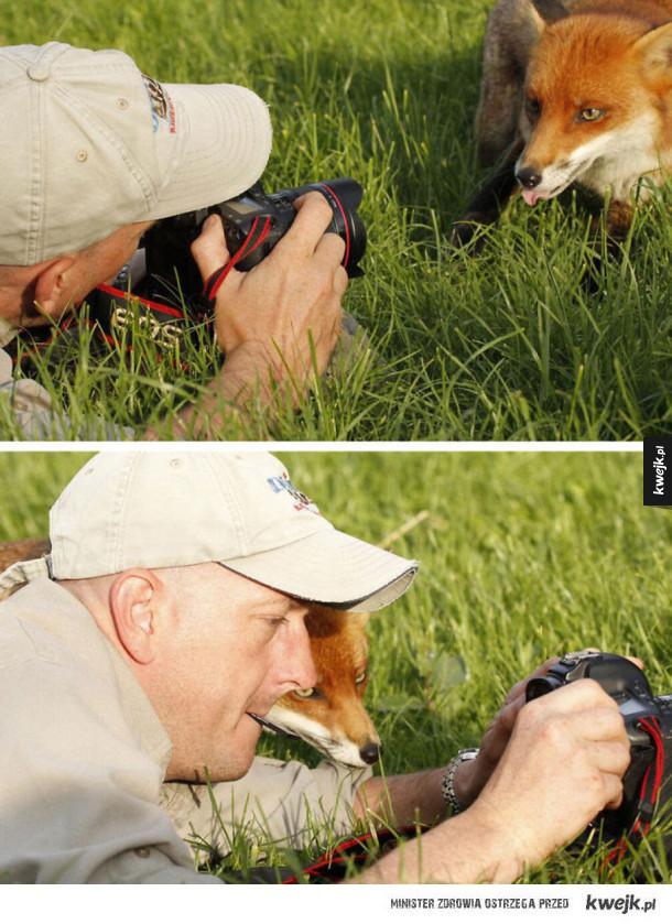 Zostań fotografem dzikiej przyrody, mówili, będzie fajnie, mówili