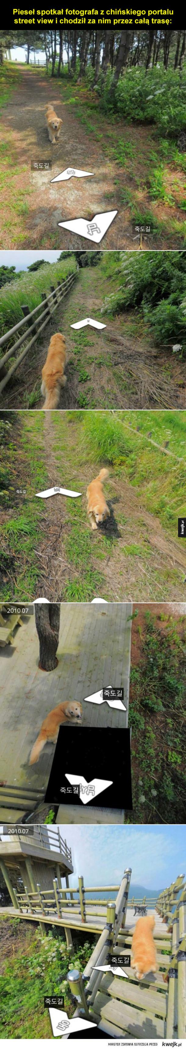 Pies wędrowiec