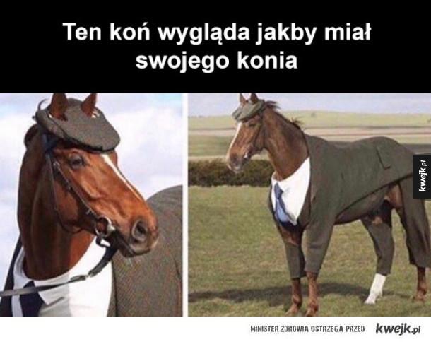 bogaty koń