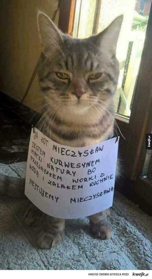 Kot Mieczysław