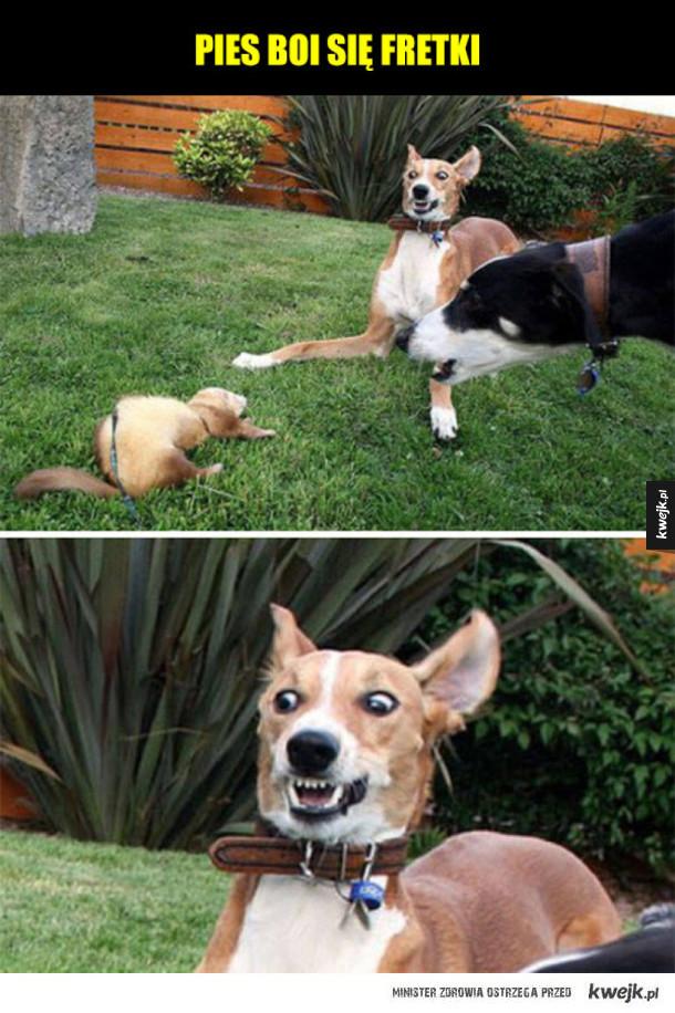 Psy, które boją się różnych rzeczy