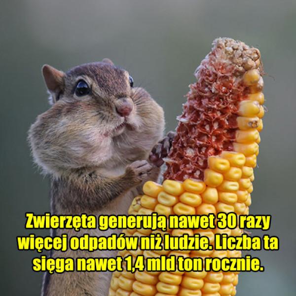 Dziwne fakty o zwierzętach